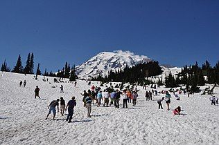 Mount Rainier - Paradise Meadow in July 03.jpg
