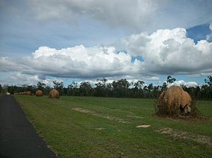 Mareeba - Image: Moved Termite Mounts Mareeba