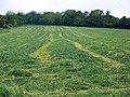Mown grass near East Marden - geograph.org.uk - 1344573.jpg