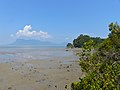 Mudflat at Low Tide with Santubong Peninsula in the background (15735828941).jpg