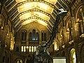 Museu de História Natural (1878949610).jpg