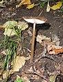 Mushroom, Ondřejovsko (8).jpg