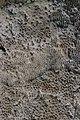 Mushroom (35229233853).jpg