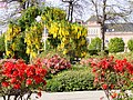 Musikhusparken (blomster juni).jpg