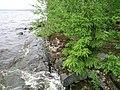 Näsijärven panimo Sami Raninen (16558077225).jpg