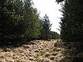 Narrow firebreak in the plantation on Glenwhistle Hill (3) - geograph.org.uk - 762179.jpg