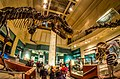 Natural History Museum - DC - 3 exposure HDR.jpg