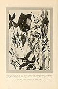 Natural history of Hawaii (Page 212) (7007406342).jpg