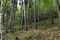 Natural monument Jílovské tisy in summer 2014 (8).JPG
