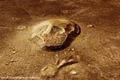 Naturally 'skull-shaped' formation in Cydonia region ESA214092.tiff
