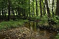 Nature reserve Libouchecké rybníčky in summer 2014 (19).JPG