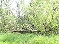 Naturschutzgebiet Heuckenlock 21.05.2014 Phase 62.JPG