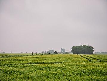 Naturschutzgebiet Langes Moor.jpg