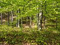 Naturschutzgebiet Nr. 158 Greifenstein (Gebiet an der Burg Greifenstein) 3 Sublocation DE-TH WDPA ID 163316 , unterhalb Kesselwarte.jpg