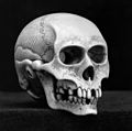 Netsuke Skull in Ivory, signed Toshinaga. Wellcome M0004069.jpg