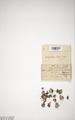 Neuchatel Herbarium Types NEU000113059.tif