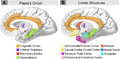 Neural systems proposed to process emotion.png