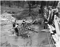 Newberry County, South Carolina. Typical stream clogging and silting causing further overflow of on . . . - NARA - 522783.tif