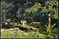 Nyíregyháza, Sóstógyógyfürdő, 4431 Hungary - panoramio (14).jpg