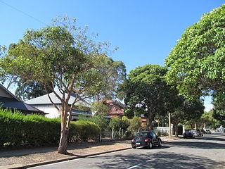 Welland, South Australia Suburb of Adelaide, South Australia
