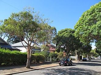 Welland, South Australia - Houses on Welland Avenue