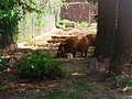 OKC Zoo May 2007 - 54 (497242571).jpg