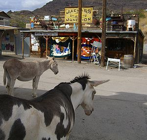 U.S. Route 66 in Arizona - Burros roam downtown Oatman