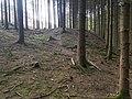 Oberschelden Grube Spies Oberer Stollen Halde2.jpg