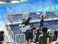 Ocean Park 海洋公園 (5379716085).jpg