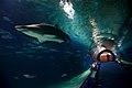 Oceanogràfic Túnel de Océanos 11022008.jpg
