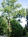 Ogród Strzelecki park w Tarnowie, ul. Piłsudskiego, Słowackiego (-) 3 pavw..JPG