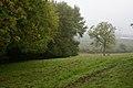 Oldhouse Spinney - geograph.org.uk - 259718.jpg