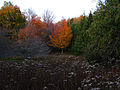 Orange-leaves-tree-fall - West Virginia - ForestWander.jpg