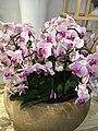 Orchid-6.jpg