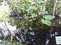 Orto botanico di Napoli 38.jpg