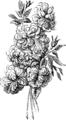 PIQUET compose de 6 roses.png