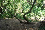Vista do Parque (6)