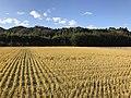 Paddy fields on west side of Shin-Toyotsu Station.jpg
