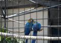 Papagayos.PNG
