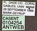 Paratrechina pubens casent0104254 label 1.jpg