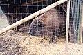 Parc animalier La Reid 20080220 5.jpg
