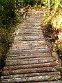 Parque Nacional Chiloé-planchado.jpg