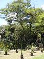 Parque del Este 2012 044.JPG