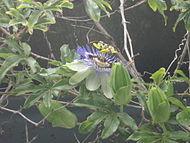 ebracteate flower example
