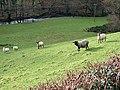 Pasture at Cae Heulen - geograph.org.uk - 296317.jpg