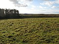 Pastures and plantation south of Brocolitia - geograph.org.uk - 1132047.jpg