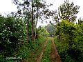 Path in Malnad.jpg