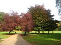Path in the Park - geograph.org.uk - 1842895.jpg