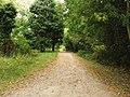 Path through the trees - geograph.org.uk - 1550847.jpg