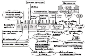 Mycoplasma pneumoniae - Pathogenicity of Mycoplasma pneumoniae in vasculitic/thrombotic disorders